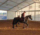 namiot jeździecki szkółka jeździecka